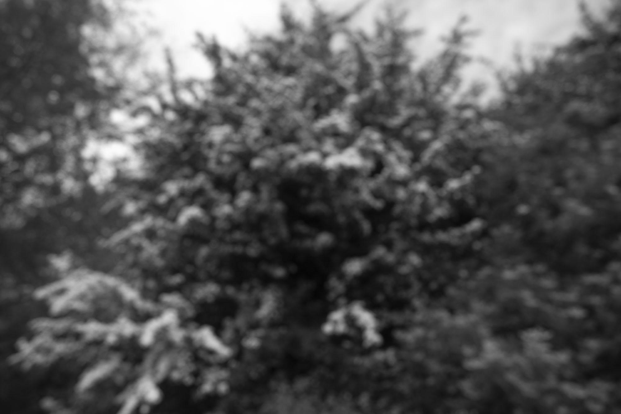 Day65_Crazy_tree